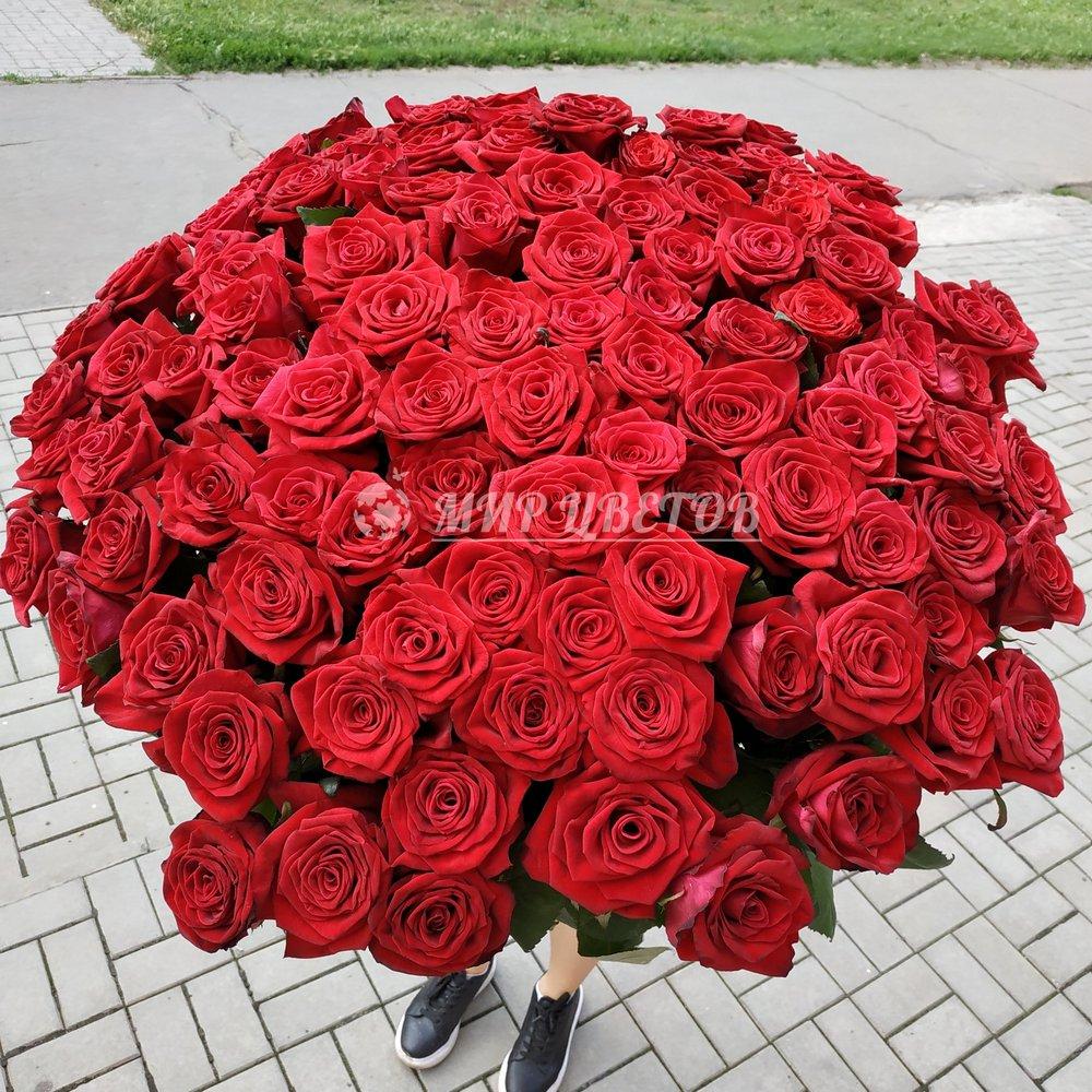101 красная роза Гран-при 80см