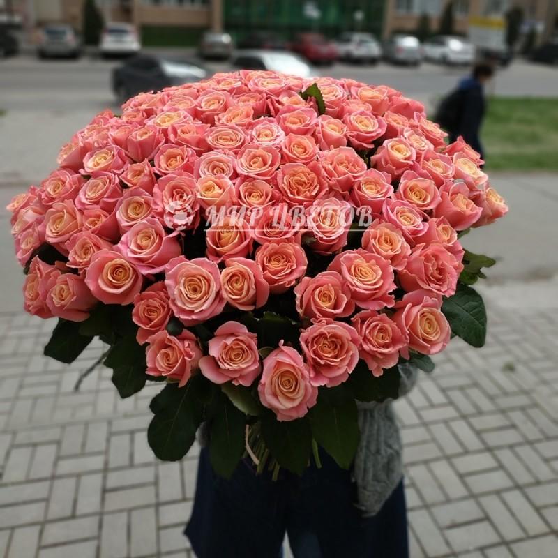 101 нежно-розовая роза