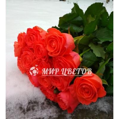 Букет 15 коралловых роз