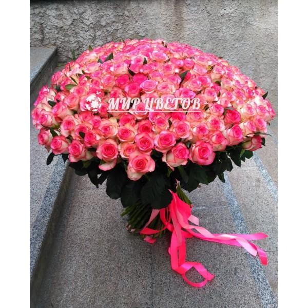 201 роза Букет Гигант класса LUX