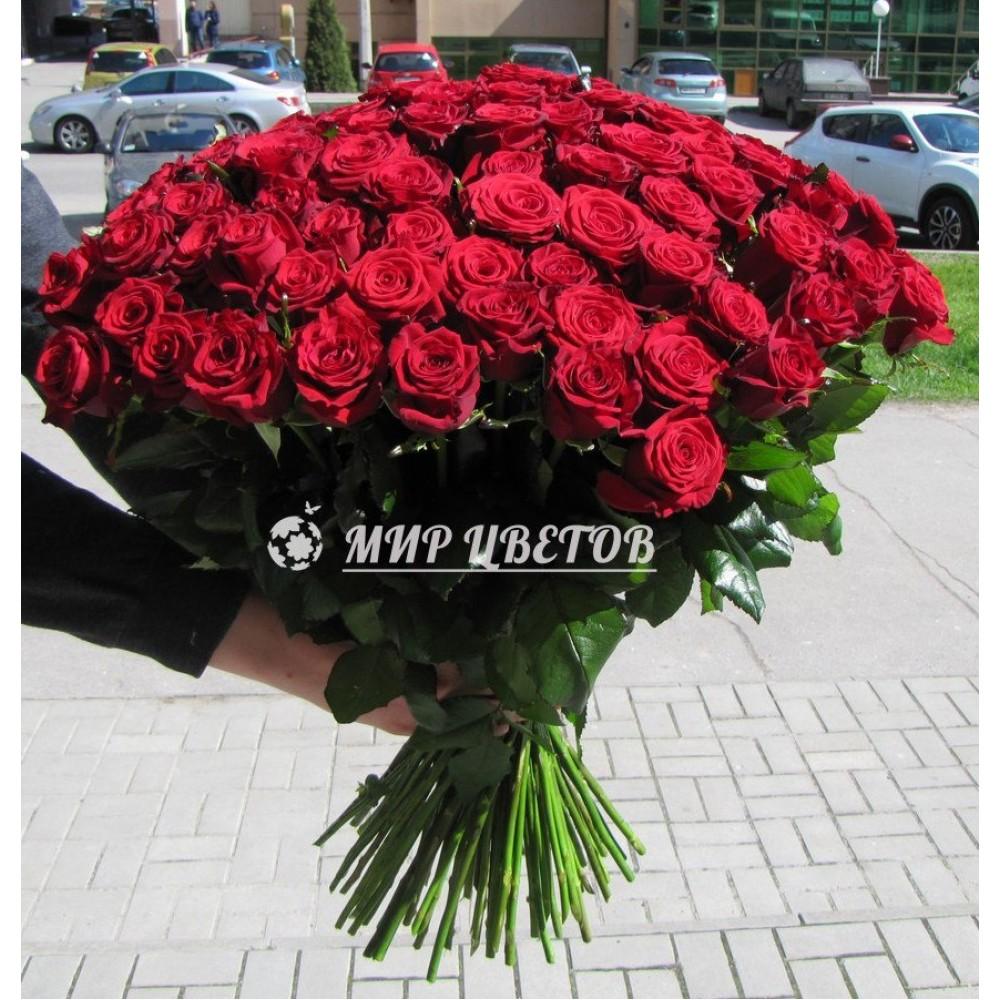 101 красная роза Стандарт высота роз 70см