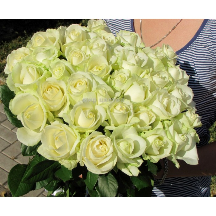 Букет 35 белых роз